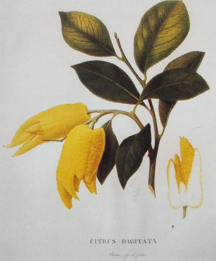 Flower vase pronunciation - Vingercitroen